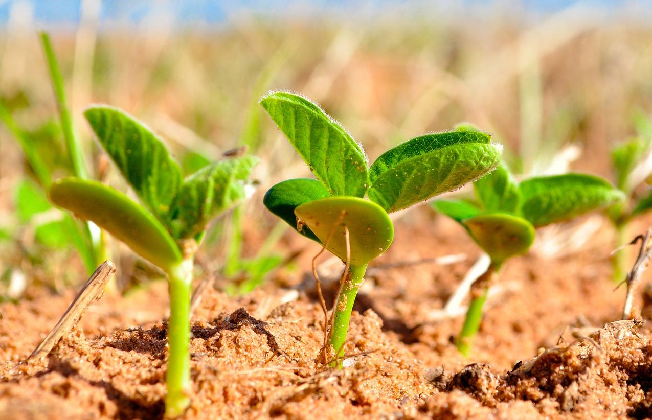 cambio-de-tendencia-en-la-industria-agroalimentaria-mas-innovacion-por-innovacion