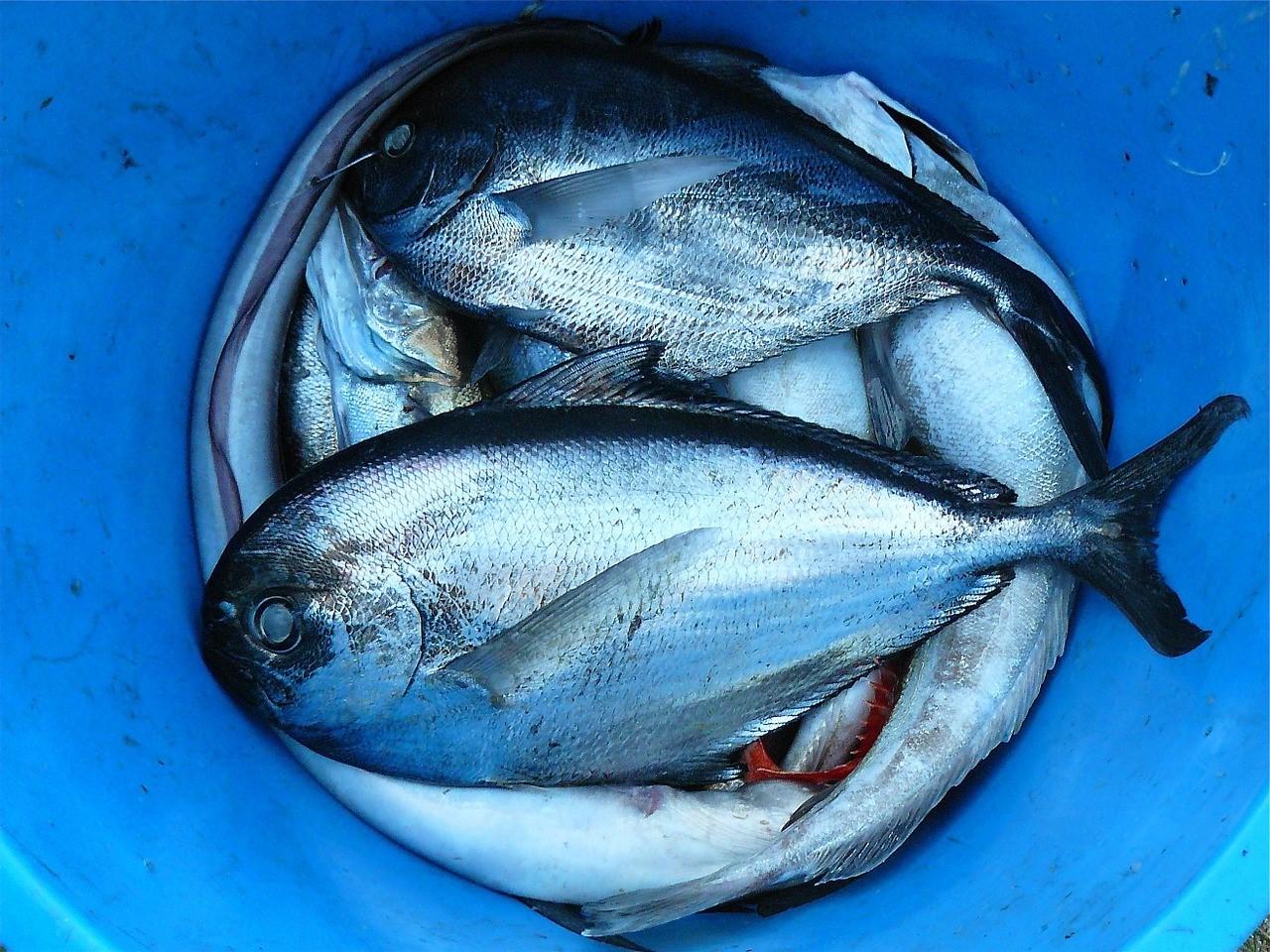 espana-mantiene-liderazgo-produccion-industrial-la-ue-productos-pesca